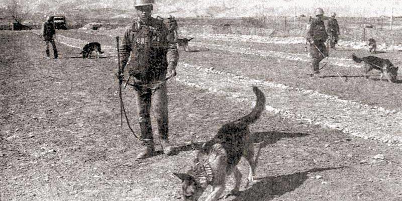 Собаковод над міною