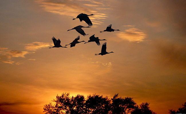 Журавлі летять