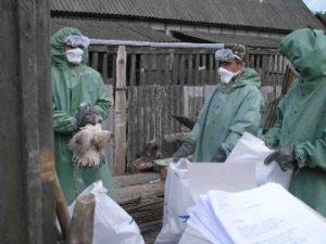 Борються з пташиним грипом та свинячою чумою