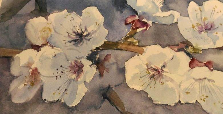 Цвіт абрикоски весняний
