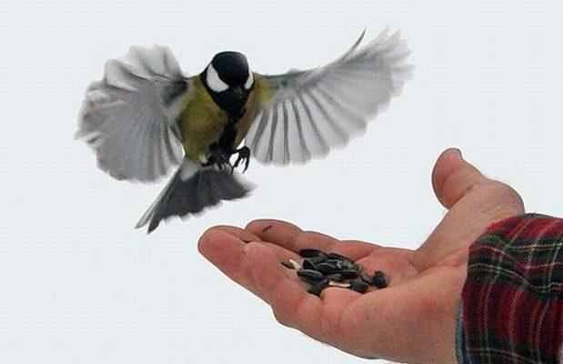 Пташина їдальня взимку