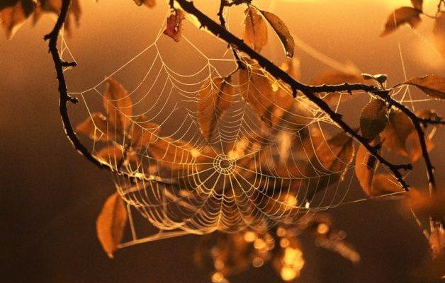 Осіння павутинка