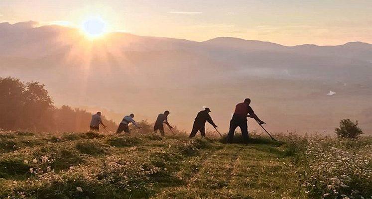 Косарі на світанку