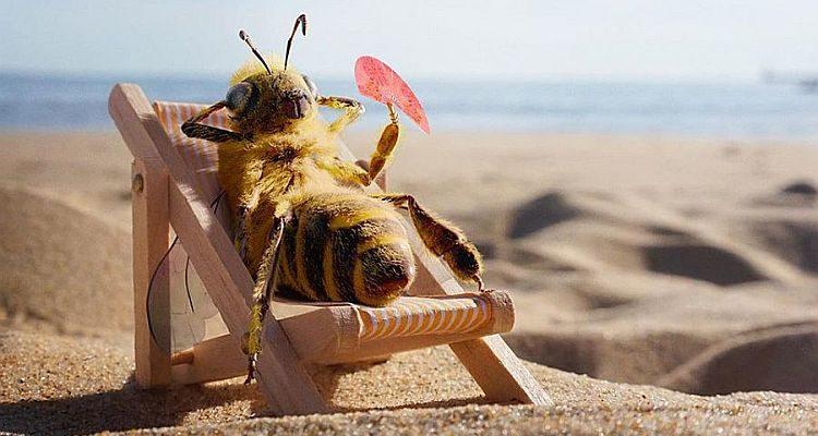 Бджола-трудівниця