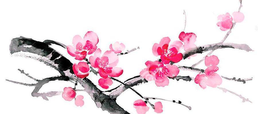 Квітне сакура