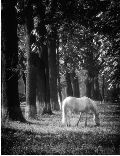 Конячка в парку