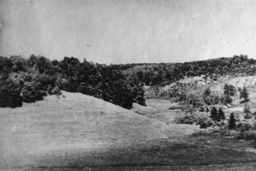 Загальний вигляд урочища «Попас» поблизу хутора Бабчин, де були розстріляні радянські громадяни